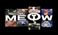 Meow 111