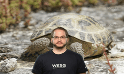 Chills Landschildkröten