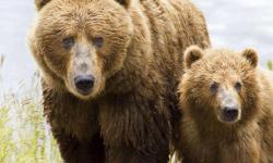 We Dislike Bears
