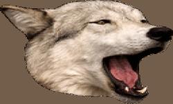 DogChamp